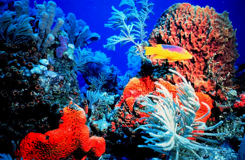 The Coral Reef in Bermuda