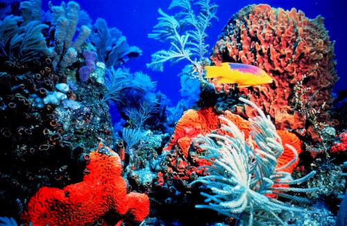 The Coral Reef in Bermuda