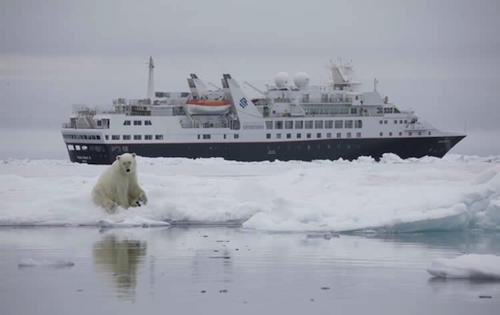 See Polar Bears on