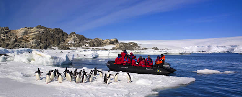 Get the chance to come face to face with penguins!